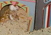 Mäusezirkus 2